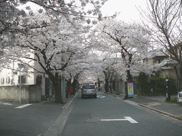 桜のトンネル 2011 4 10 006 縮小