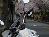 桜のトンネル 2011 4 10 015 crm