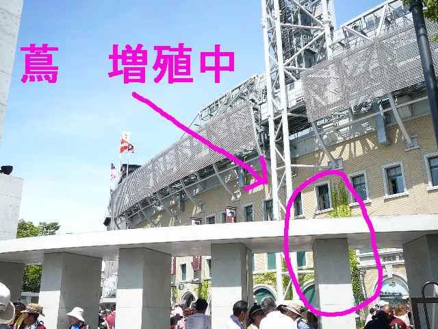 高校野球 0088