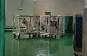 3月24日 犬3匹