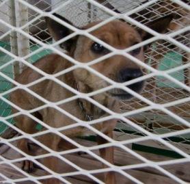 3月24日 志摩茶犬