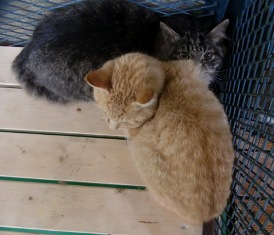 猫2匹公社
