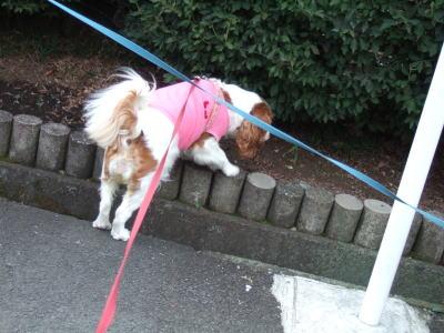 21.7.20 お散歩 7