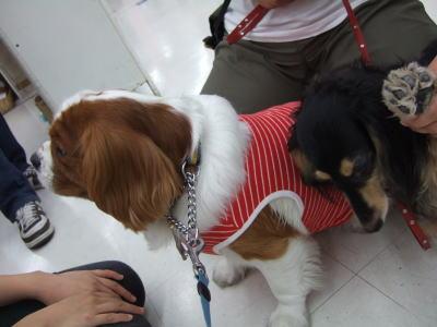 マーチ御散歩 2009.9.11   8