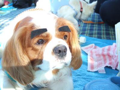 眉毛犬 マーチ 3