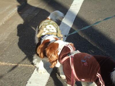 お散歩 10