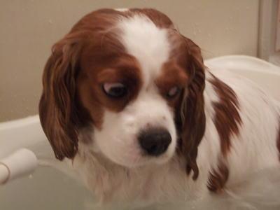 お風呂 10