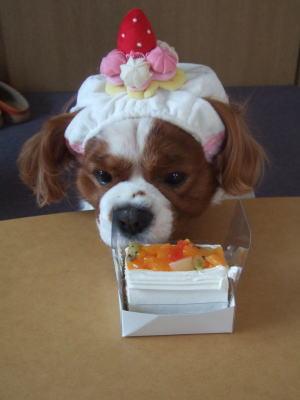 お誕生日ケーキ 2