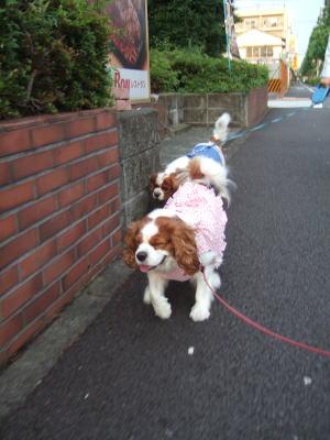 今朝のお散歩 6