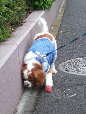 今朝のお散歩 15