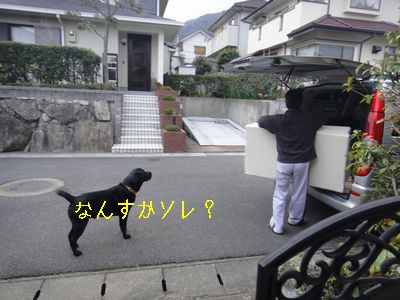 b2011 02 18_3180