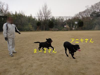 b2011 03 26_6245