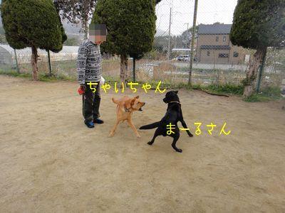 bb2011 03 26_6233