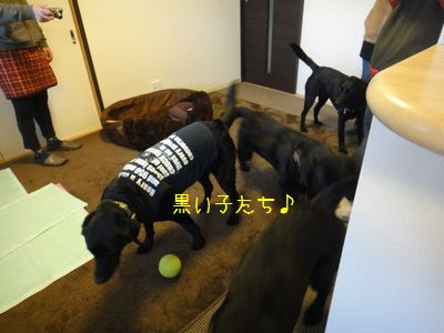 b2011 03 26_6305