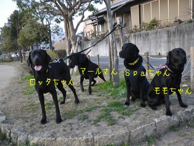 bb2011 03 26_6043