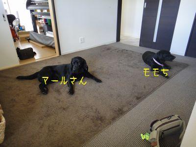 b2011 03 27_6194