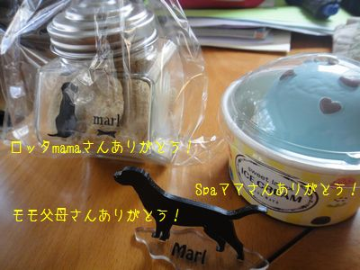 b2011 03 29_6406