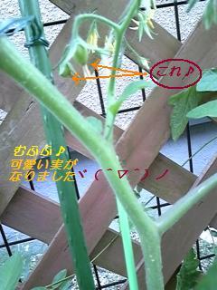 DVC00069 (3)
