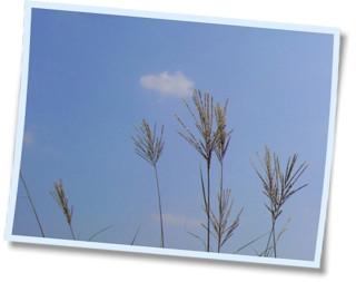 ススキと秋の空