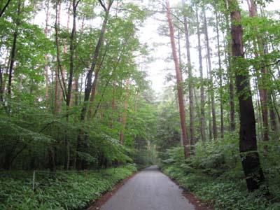 心配になるほど森深い宿でした