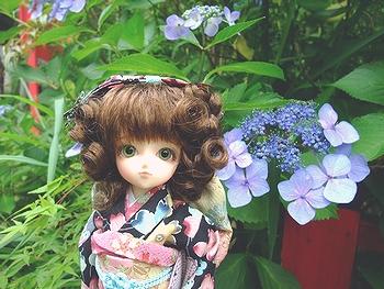 紫陽花&ミミ2