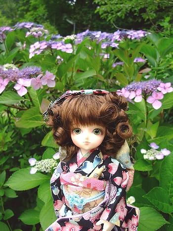 紫陽花&ミミ1