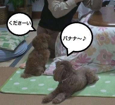 001_20110220000810.jpg