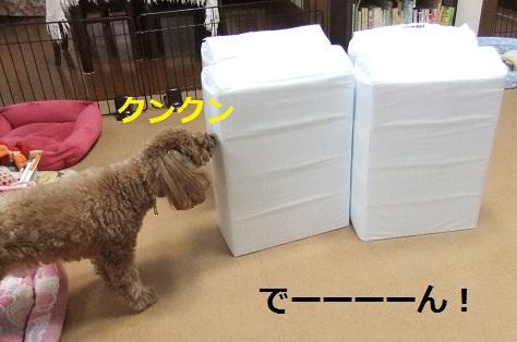 008_20110217234632.jpg