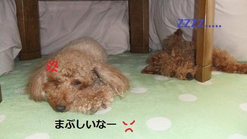 008_20110308000927.jpg