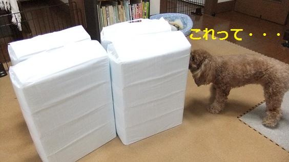 009_20110217234632.jpg