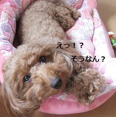 010_20110216232215.jpg