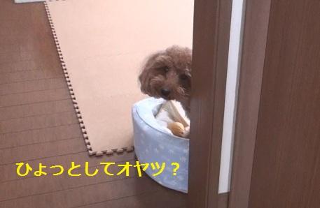 015_20110226001344.jpg