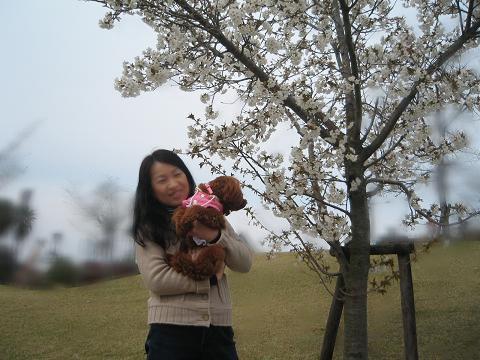 これが桜?