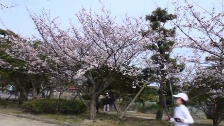 お花見 002