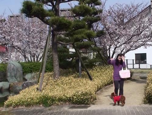 お花見 018