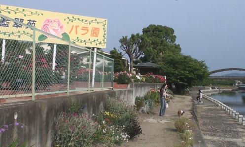 藍住薔薇園 079
