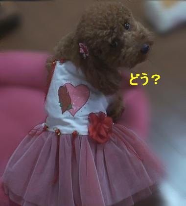 ドレス 008m