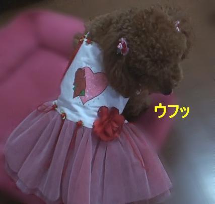 ドレス 006sm