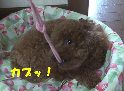 ナナ姫 004