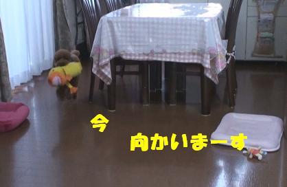 ナナ姫 024