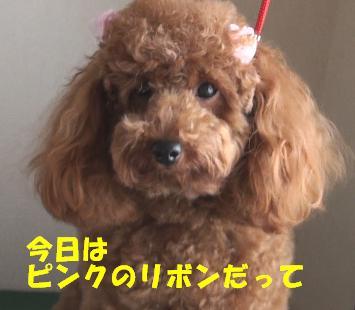 亀鶴公園 002