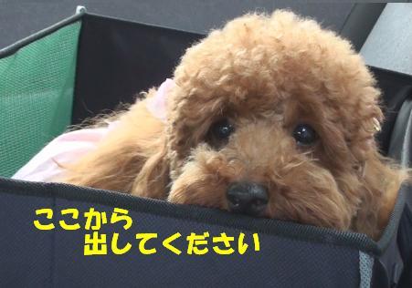亀鶴公園 009