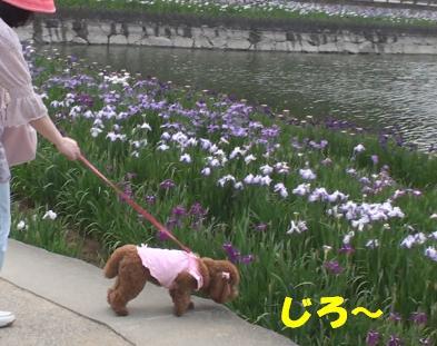 亀鶴公園 020