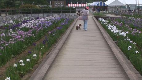亀鶴公園 021