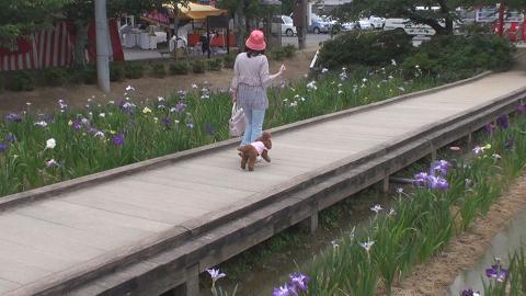 亀鶴公園 030