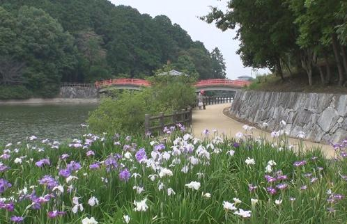 亀鶴公園 036
