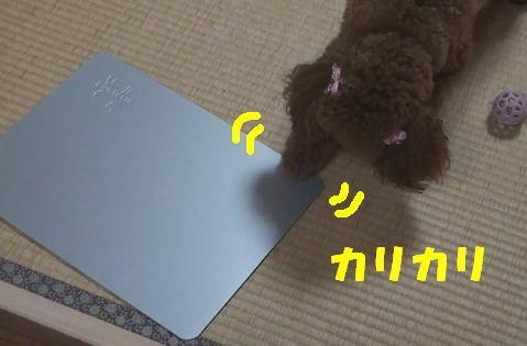 ひんやりプレート 013
