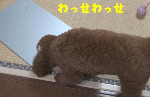 ひんやりプレート 014