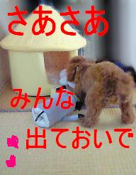 nana 001