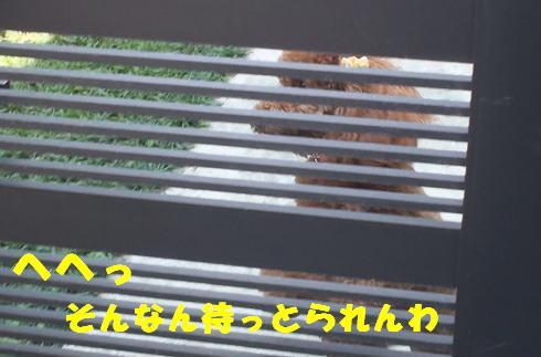 お庭にて 006